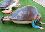 Ella Turtle